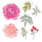 Vector seamless floral pattern. Illustration with a set of vector  flowers on white background. Peony, Rose, ornamental grass, berries, leaves. Design for Stock Images
