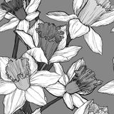 Vector seamless floral pattern with narcissus Royalty Free Stock Photos