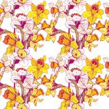 Vector seamless floral pattern with narcissuses Stock Photography