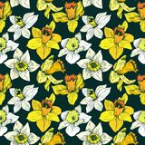 Vector seamless floral pattern with narcissuses Royalty Free Stock Image
