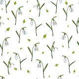 Vector seamless floral pattern with snowdrops royalty free illustration
