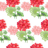 Vector seamless floral pattern. White background with geranium flowers. Seamless pattern. Illustration victorian style. Vintage. Vector. Designs for textiles Royalty Free Stock Photos