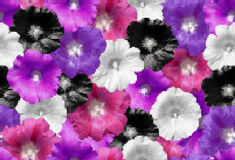 Vector seamless flower texture. Realistic colorful flowers. Vector mosaic Royalty Free Stock Photo