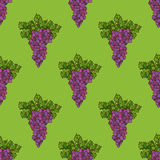 Vector seamless grape pattern. Set of bright grape and leaf on green background. Thanksgiving day. Harvest time. Boundless background for your design Royalty Free Stock Image