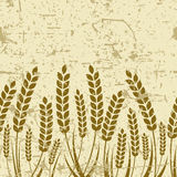 Vector seamless horizontal old grunge background with ripe ear o Stock Image