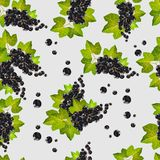 Vector seamless illustration of a black currant and green leaves.  Stock Photos