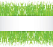Vector seamless illustration of green grass Royalty Free Stock Photo