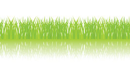 Vector seamless illustration of green grass Stock Photo