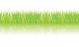 Vector seamless illustration of green grass Stock Photo