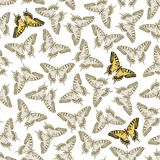 Vector. Seamless Ornament with Butterfly Stock Photography
