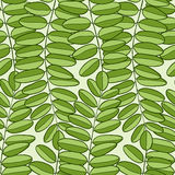 Vector Seamless pattern with acacia leaves. Spring background for packaging, textile and fabric design Royalty Free Stock Photo