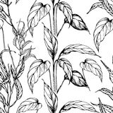 Vector seamless pattern with anthurium leaves Stock Photos