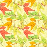 Vector seamless pattern with autumn leaves Royalty Free Stock Photography