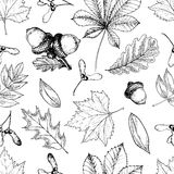 Vector seamless pattern with autumn leaves. Hand drawn vintage style engraved art. Oak, mapple, chestnut, acorns. Royalty Free Stock Image