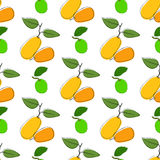 Vector seamless pattern background with hand drawn kumquat and lime in vintage style. On white. Use for textile, fabric, paper, we Stock Photos