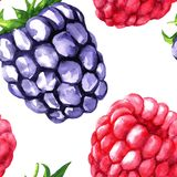 Vector seamless pattern with berries Stock Images