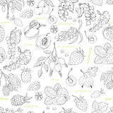 Vector seamless pattern with berries on a white background Royalty Free Stock Photo