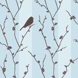 Vector seamless pattern with bird on sakura Stock Photos