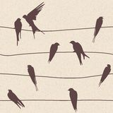 Vector seamless pattern with birds on wires Royalty Free Stock Image