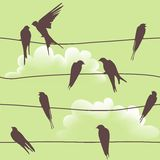 Vector seamless pattern with birds on wires Stock Photos
