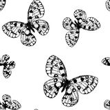 Vector seamless pattern from black butterfly Parnassius apollo. Vector seamless pattern from black and white butterfly Parnassius apollo. Coloring page book Stock Photography