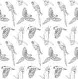 Vector seamless pattern of black ink line hand drawn parrot flying and sitting on white background vector illustration