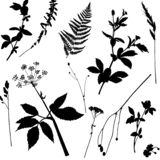 Vector seamless pattern with black wild plants vector illustration