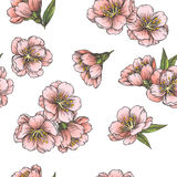 Vector seamless pattern with blooming almond Royalty Free Stock Images