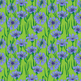 Pattern with blue cornflowers Stock Photos