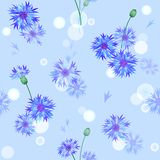 Vector seamless pattern with bluebottles Royalty Free Stock Image