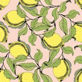 Vector seamless pattern with branches and lemons. Hand drawing. Decorative background Stock Photography