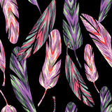 Vector seamless pattern. Bright abstract feathers. Stock Images
