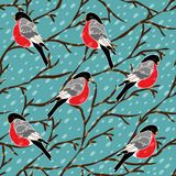 Vector seamless pattern with bullfinch bird Royalty Free Stock Photography