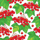 Vector seamless pattern with bunch of Viburnum or Guelder rose, green leaves and red berry on the white background. Floral background with viburnum in contour Stock Images