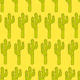 Vector seamless pattern with cactuses - design print, poster, card, textile Royalty Free Stock Image