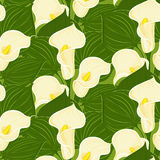 Seamless pattern with calla Royalty Free Stock Images