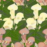 Vector seamless pattern with calla flowers Stock Photography