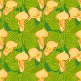 Vector seamless pattern with calla Stock Photos