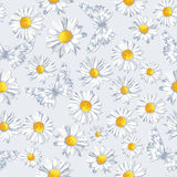 Vector seamless pattern with camomile and butterfly Stock Photography