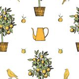 Vector seamless pattern  with canaries and citrus plant. Royalty Free Stock Photography