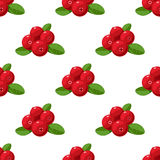 Vector seamless pattern. Cartoon cranberries with green leaves isolated on a white background. Cute illustration used for book, po. Vector seamless pattern with Royalty Free Stock Photos