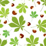 Vector seamless pattern of chestnut leaves and nuts in color on white background. Cover design Royalty Free Stock Photography