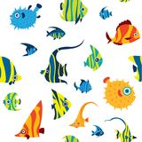 Seamless pattern with cartoon reef fish. Vector seamless pattern with color reef fish on a white background. Cartoon wallpaper with tropical fish - angelfish Stock Images