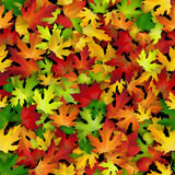 Vector seamless pattern with colorful autumn leaves. Natural backdrop Royalty Free Stock Photos