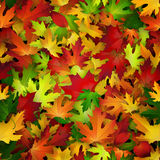 Vector seamless pattern with colorful autumn leaves Stock Photos