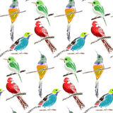 Vector seamless pattern with compositions of hand drawn tropical birds. Beautiful colorful floral endless background Royalty Free Stock Photography