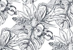 Vector seamless pattern with compositions of hand drawn tropical flowers and plants. Vector seamless pattern with compositions of hand drawn tropical flowers Royalty Free Stock Photo