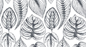 Vector seamless pattern with compositions of hand drawn tropical plants. Vector seamless pattern with compositions of hand drawn tropical flowers, palm leaves Stock Photography