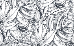 Vector seamless pattern with compositions of hand drawn tropical plants. Vector seamless pattern with compositions of hand drawn tropical flowers, palm leaves Royalty Free Stock Photo