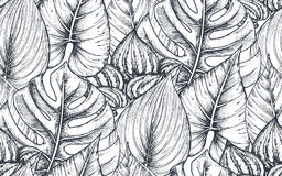 Vector seamless pattern with compositions of hand drawn tropical plants. Vector seamless pattern with compositions of hand drawn tropical flowers, palm leaves Stock Image